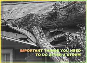 Important Things You Need to Do After a Storm
